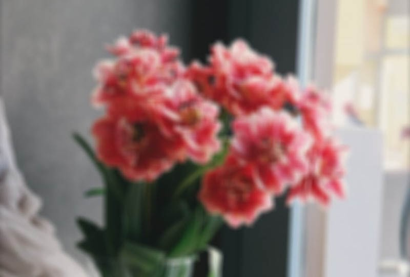 A low-quality image loaded using the 'blur up' technique.
